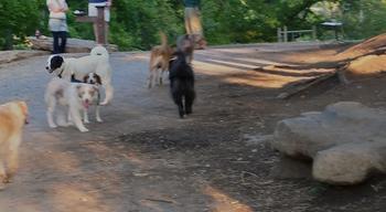 Dog_park_afternoon_fun